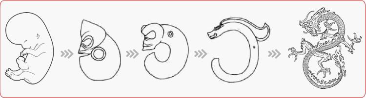 龙图腾从胚胎演变的路径