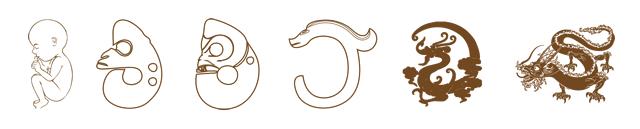▲红山女神根据胚胎的形象,创造了古玉龙的原始形态(左2)。古玉龙的神态、面部形状以及身体蜷曲的姿势,全部都是胚胎的形象。在远古时代,未完全发育成型的胚胎肯定是无法存活的,因此人们才会用玉猪龙的形象祭奠和超度婴灵。可以说,龙文化自出现开始就带有浓烈的护佑婴灵的意味。到了战国时代,龙的形态已经发生了很大的改变,C型龙(左4)逐渐成为主流龙纹形象。